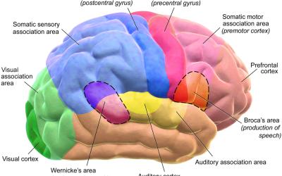 Dopamin og hjernens belønningsenter
